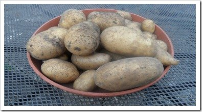 homegrown_potatoes