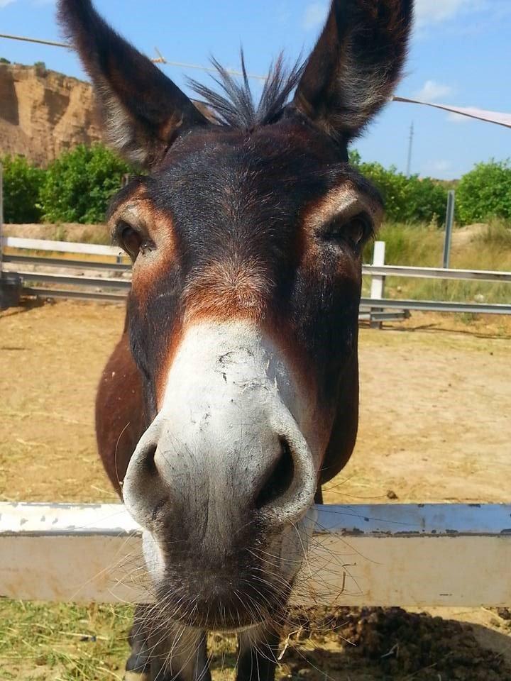 A donkey at Pig Village